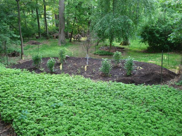 Cgardens rain gardens for Home rain garden design